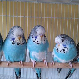 mavis yavrularim