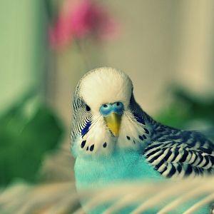 Muhabbet Kuşu <3