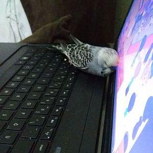 Ruhi bilgisayarın sıcağında uyuyakaldı :)