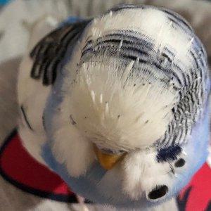 muhabet kuşumdaki sorun
